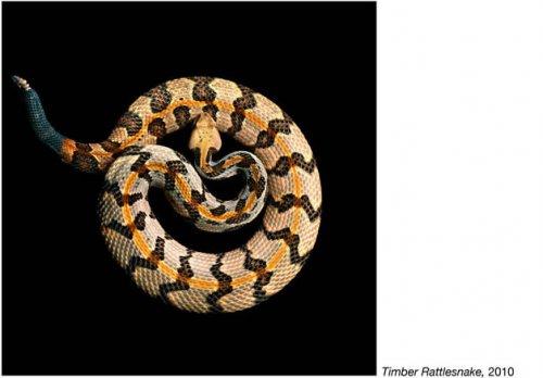 Змеи от Марка Лайта (22 фото)