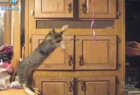 Юмор: Кошачьи казусы