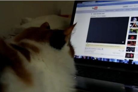Юмор: Кошки