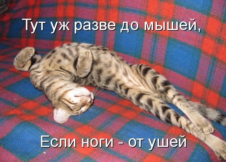 http://klopik.com/uploads/posts/2011-12/1323630875_1044186.jpg