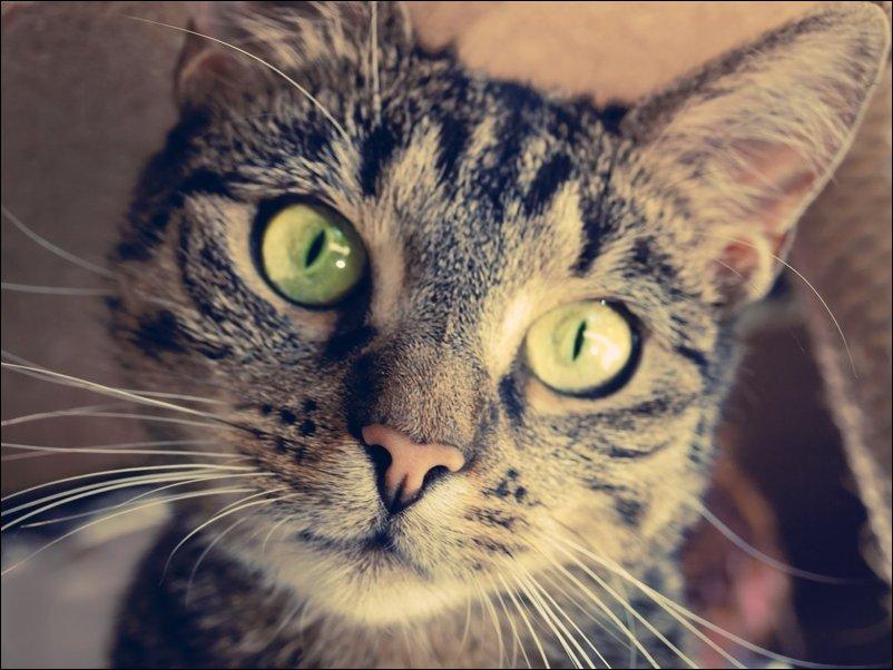 что распечатать фото кошки хорошим