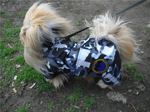 Одежда для собак пекинес