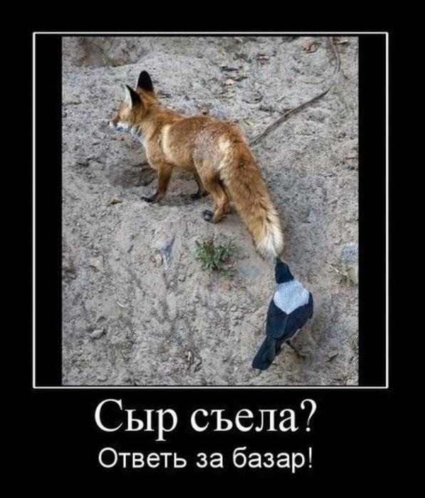 этому лиса с демотиваторами бывают виды