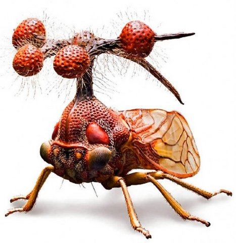 Самое нелицеприятное насекомое нашей планеты (26 фото)