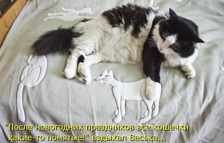 Новый год смешные картинки с животными с надписями, старый новый