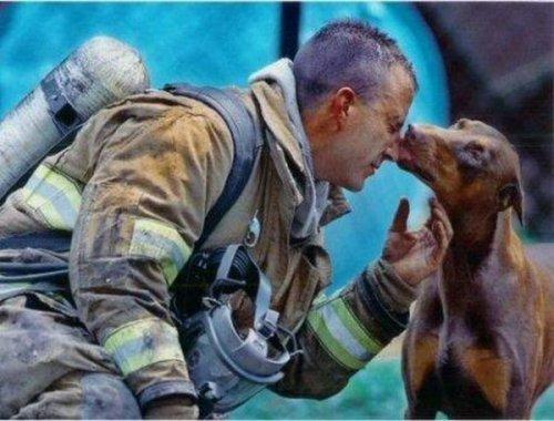 Спасение братьев наших меньших (27 фото)