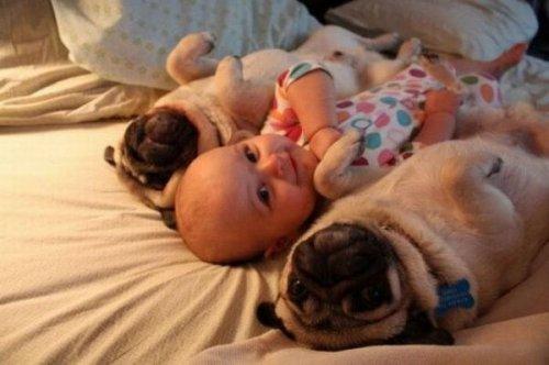 Как познакомить собаку с новорожденным?