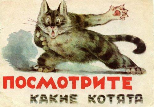 А не похож ли кто-нибудь из вас на этих котят? (12 фото)