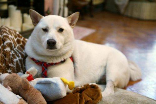 Собака выживака (9 фото)