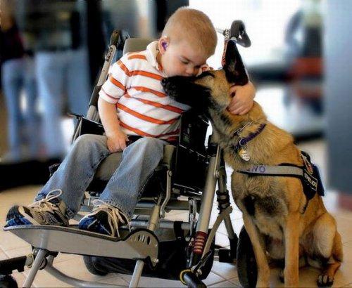 Самый лучший друг! (17 фото)