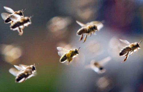 Лучшие фотографии дикой природы за 2011 год (50 фото)