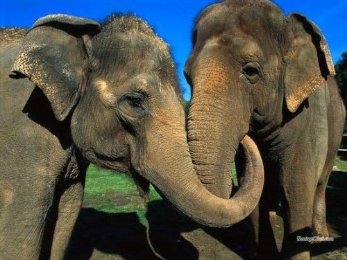 Представители из мира животных с экстраординарными качествами (15 фото)