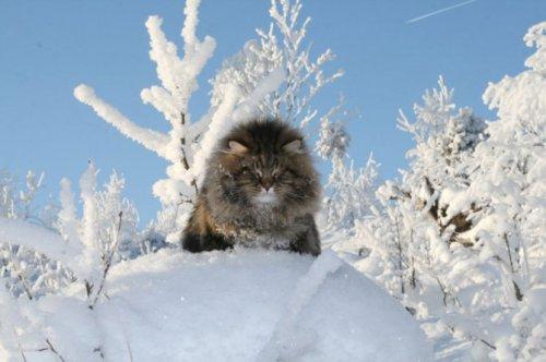 Зимний сибиряк (26 фото)
