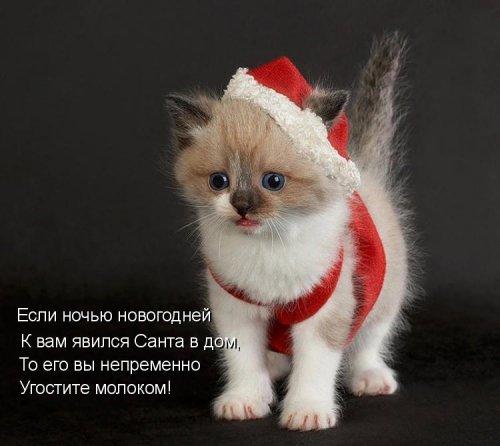 Новогодняя котоматрица (25 фото)