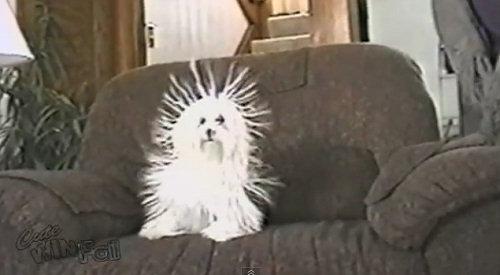 Забавная наэлектризованная собака