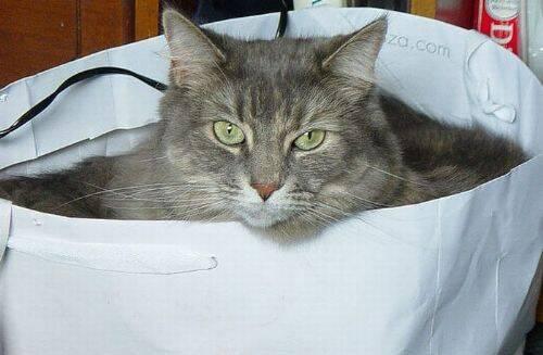 Забавные котейки  в сумках (17 фото)