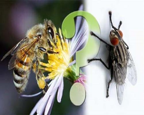 Муха и пчела
