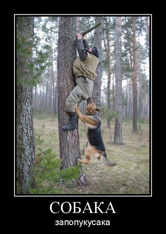 демотиватор про охотника