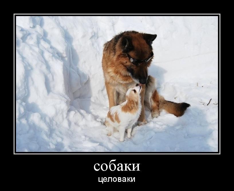 хочу собаку демотиватор оттенки