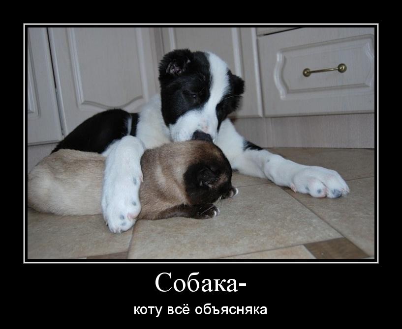Демотиваторы мальчик и собака