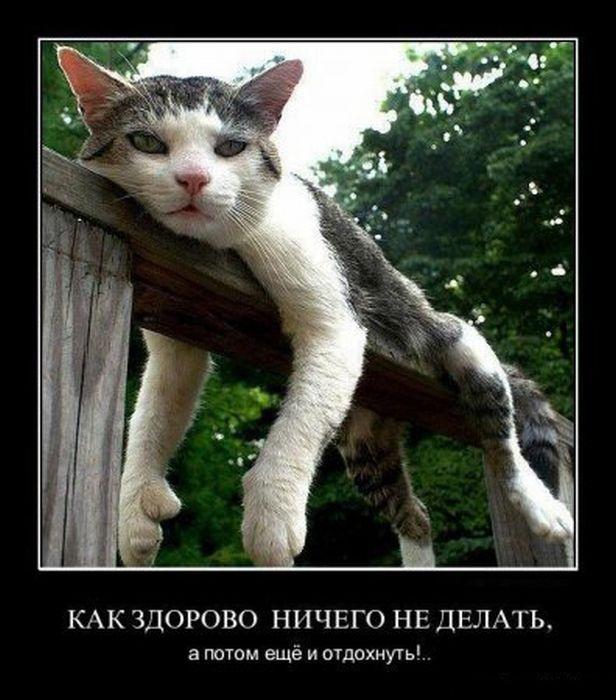 лучшие демотиваторы с котами этой
