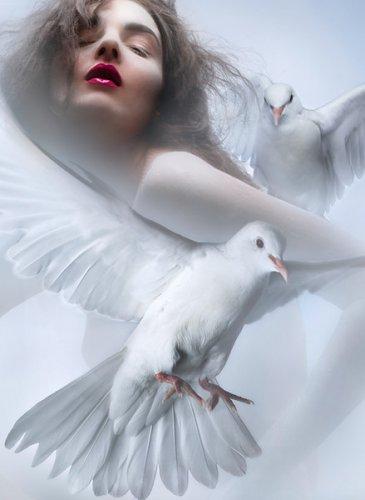 Расскажите птицы что вас манит ввысь... (30 фото)