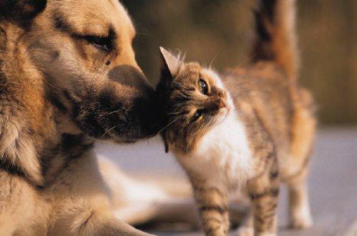Это интересно: Отличие кошек от собак