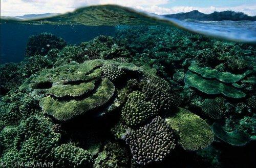 Красоты подводного мира фотографа Tim Laman (23 фото)