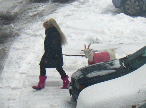 Девушка с козой (4 фото)