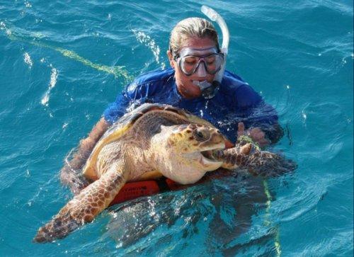 Черепаха неудачно позавтракала (5 фото)