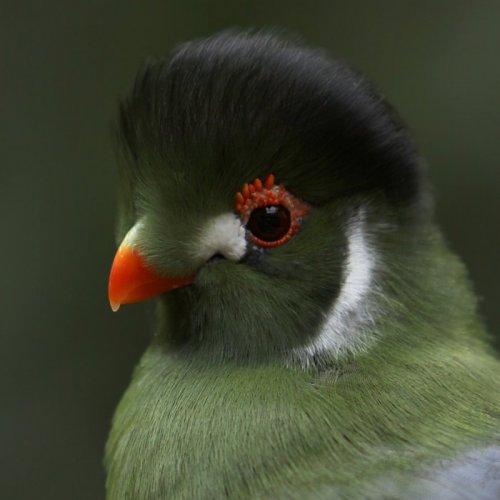Прекрасные фотографии птиц (40 фото)