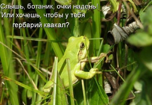 Лягухи (30 фото)