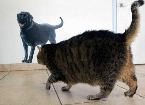 Котик-обжорик (8 фото)