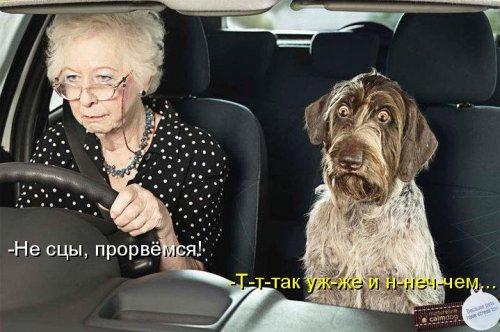 """ПЁСО""""КОТОМАТРИЦА"""" (30 фото)"""