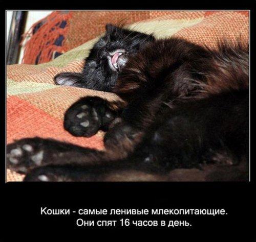 Интересные факты про кошек (14 фото)