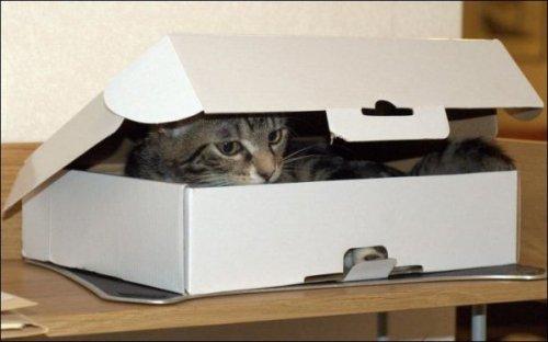 Двое в одной коробке (4 фото)