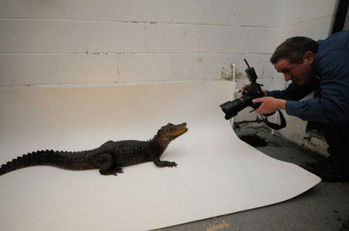Как фотографируют животных (36 фото)