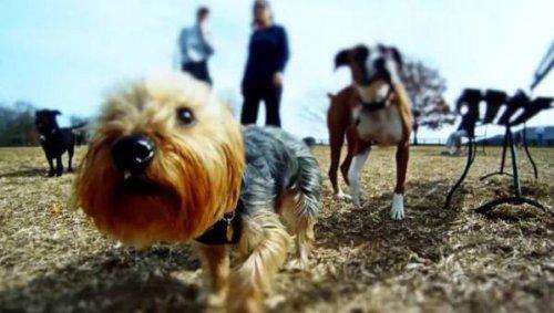 Как выглядит мир с точки зрения собаки