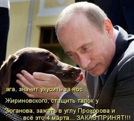 Про собак из матрицы (30 фото)