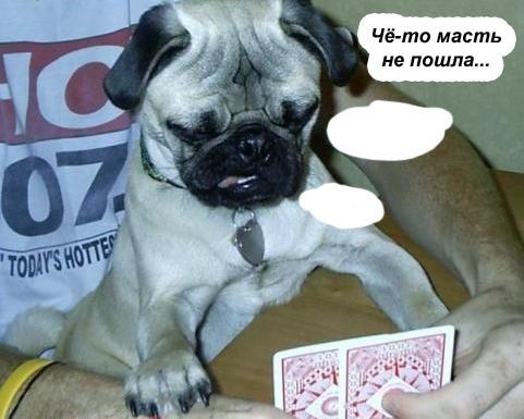 Ха-ха- дром в мире животных (28 фото)