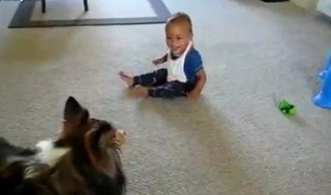 Собака играет с малышом