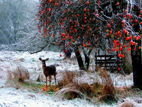 Животный мир зимой (35 фото)