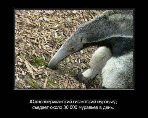 Интересные факты о животных (15 фото)