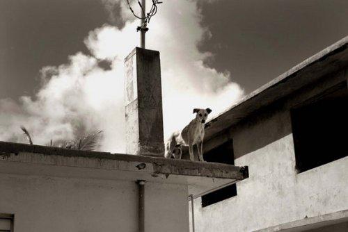 Собаки из приюта (10 фото)