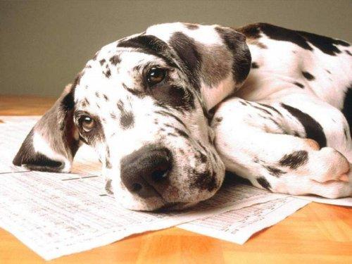 Памятка владельцам собаки