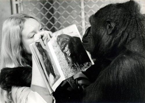Диалоги с животными