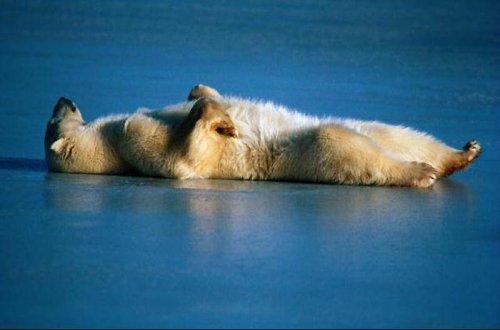 Сны животных (5 фото)