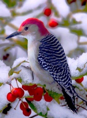 Красивые и забавные фото птиц (1 часть) (35 фото)