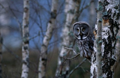 Животные от фотографа Don Hooper (18 фото)