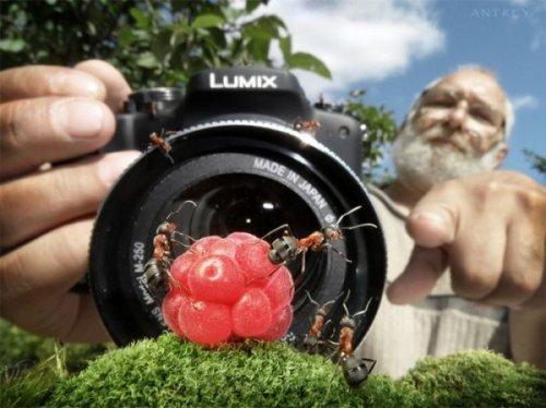 Необычная жизнь муравьев (21 фото)